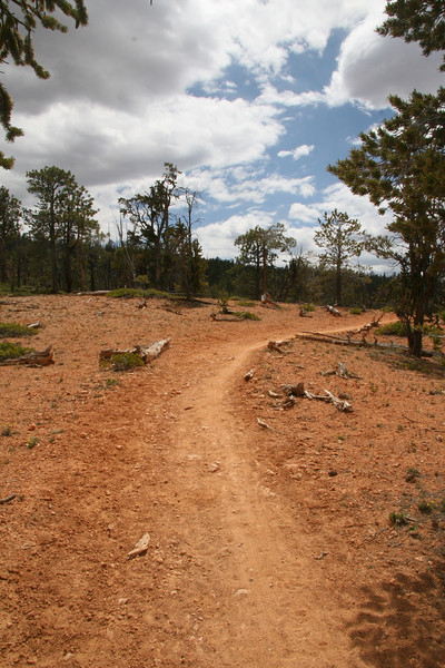 Here is an open section.  Trail is hard packed with just enough sink to provide a good bite.  Horse back riding can occur any place any time and in both directions.  MTB riders should keep this in mind while transversing the Thunder Mtn Trail.