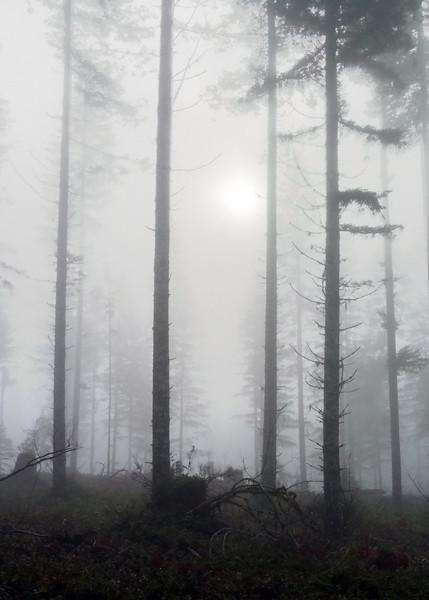 Fog rolling thru Cascades