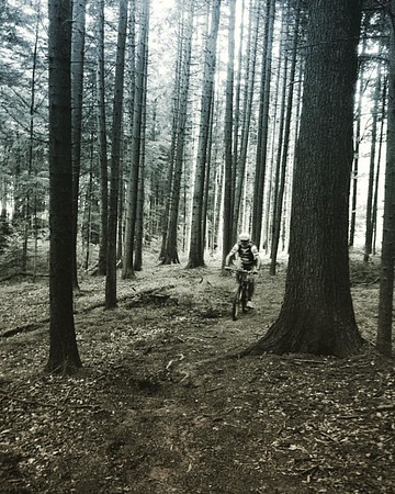 Andrea rides through the witches forest