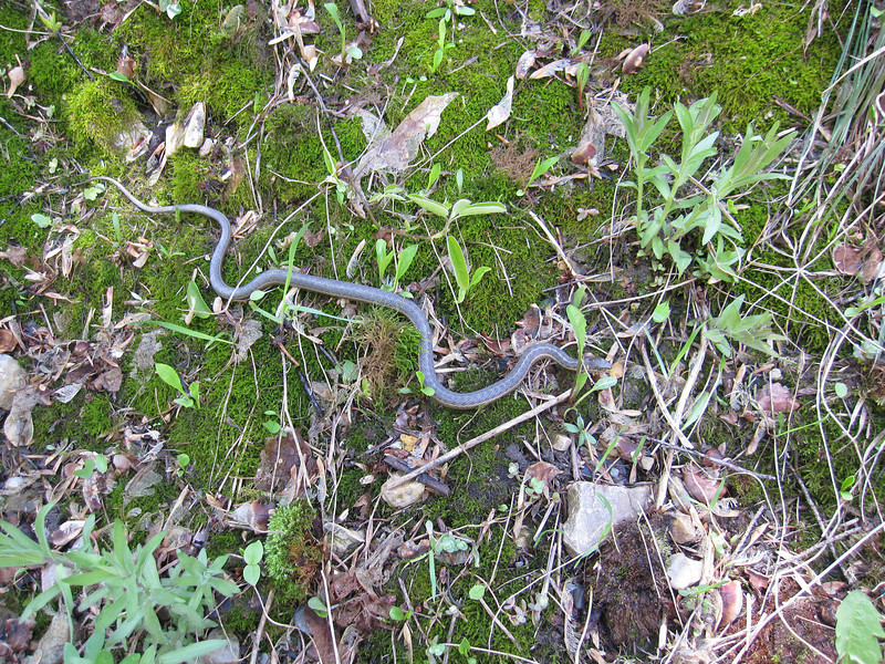 Saw this snake early on in the ride.  Today we run about 4 hours, 6 miles and 1,600 vertical feet.