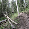 Higher up the trail gets washed out and is filled with roots.  Although not obvious in the photo, this section is extremely difficult to ride up.  It's steep!