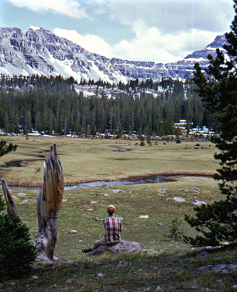 Amethyst Meadow