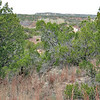 The area is heavily covered with brush and large bushes.