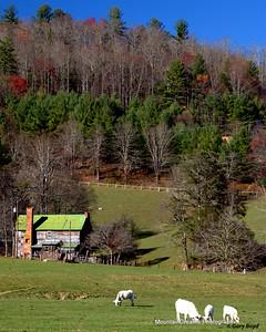 Dutch Creek Farm, Valle Crucis, NC