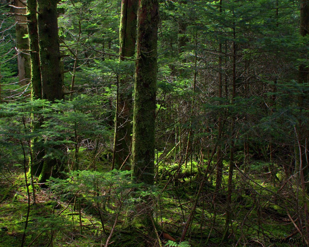 Sun in Forest - Roan Mountain Gardens