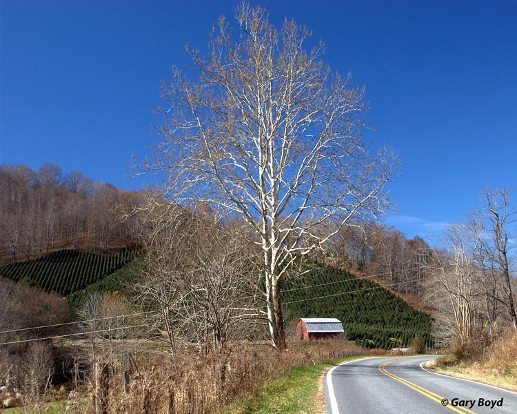 Christmas Tree Farm<br /> Ashe County, NC