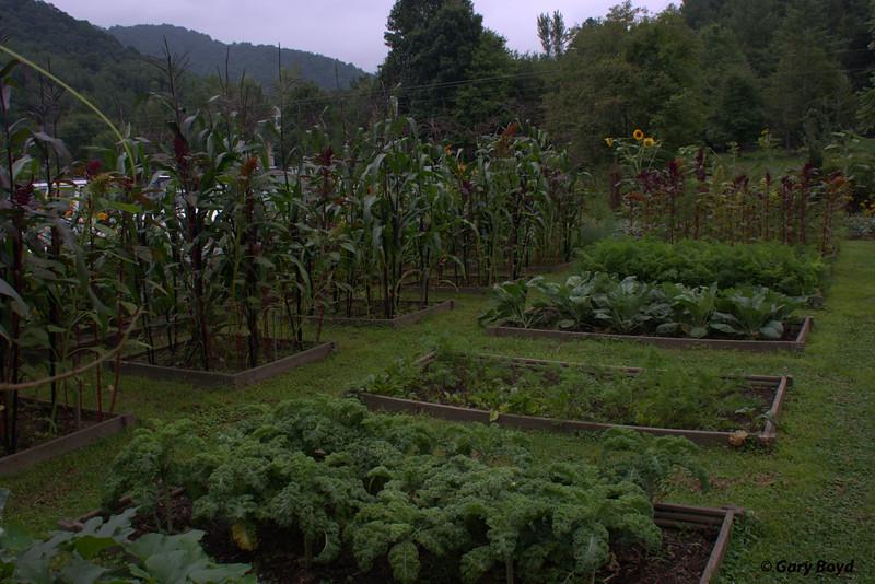 Vegetables in the Garden -  Mast Farm Inn