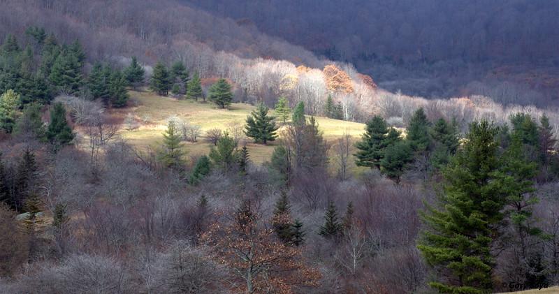 Roaring Creek Road<br /> Roan Mountain