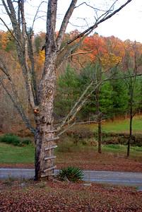 Goose Creek Fall