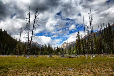 Old Forest, Emerald Lake, mountains, trees
