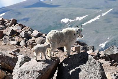 Mount Evans, Colorado, near the 14,265 ft summit, June 30, 2017.