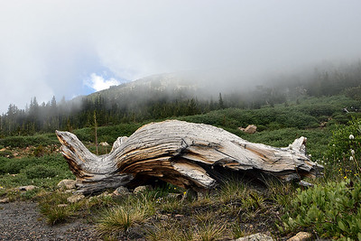 Back down from the summit, at about timberline, is the Mount Goliath Natural Area.