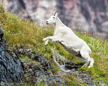 Nanny Goat Jumper