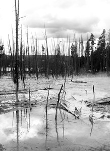 geyser landscape, Yellowstone NP