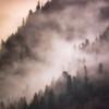 Mountain Mist on Bombi