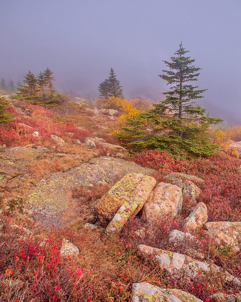Misty Mountainside