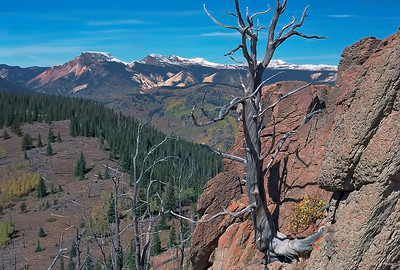 Snag Above Platoro, Colorado