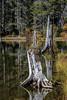Tree Stump Lake Reflections