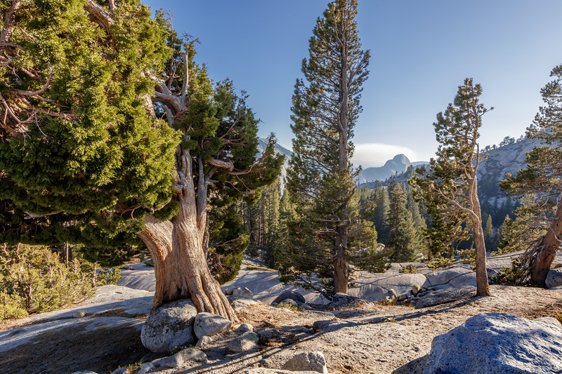 Trees and Half Dome