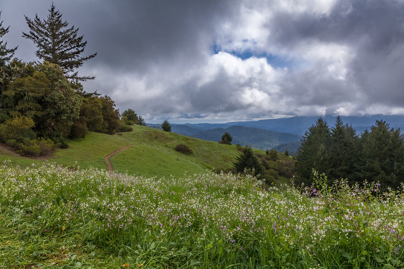 Santa Cruz Mountains Trail