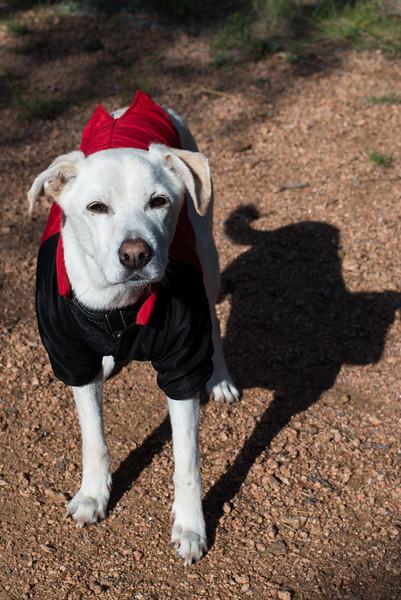 Casper the Friendly Dog