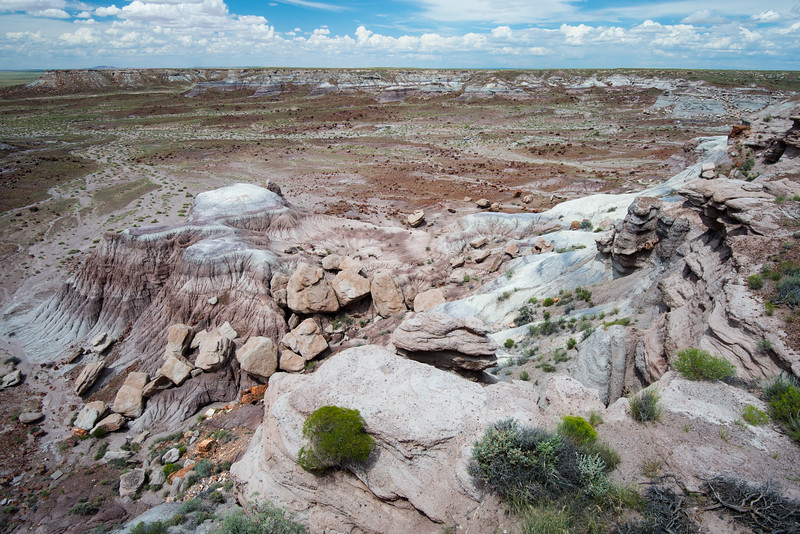Petrified Forest 2