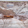 Petrified Tree in the Badlands