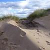 Sands of Forvie - Oct-14 - 026