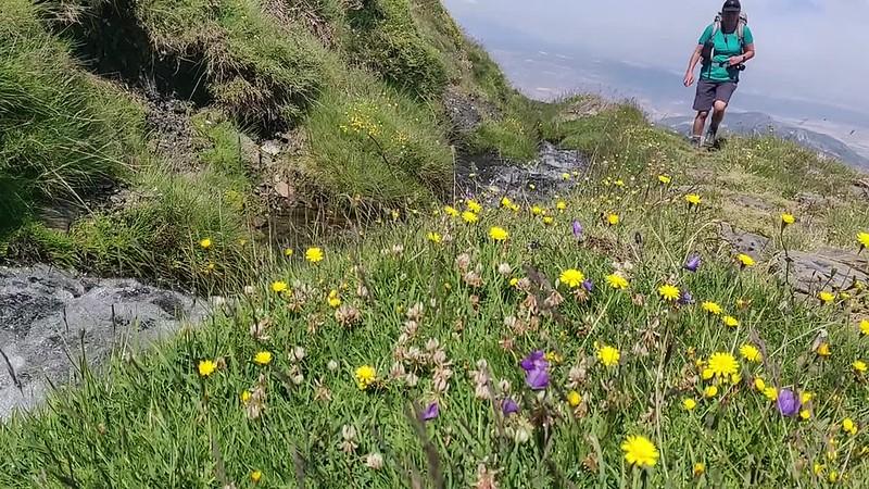 Walking Sierra Nevada Summer