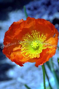 Dallas Arborutum Dallas Blooms 2003-04-09 155e2