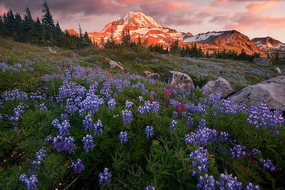 Mt Rainier wildflowers at sunset