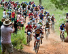 The 70 rider JV division one field starts up the first climb at Loma Rica Ranch, State Championships