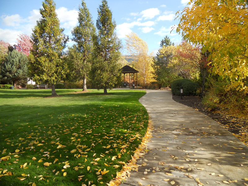 Walking path in park