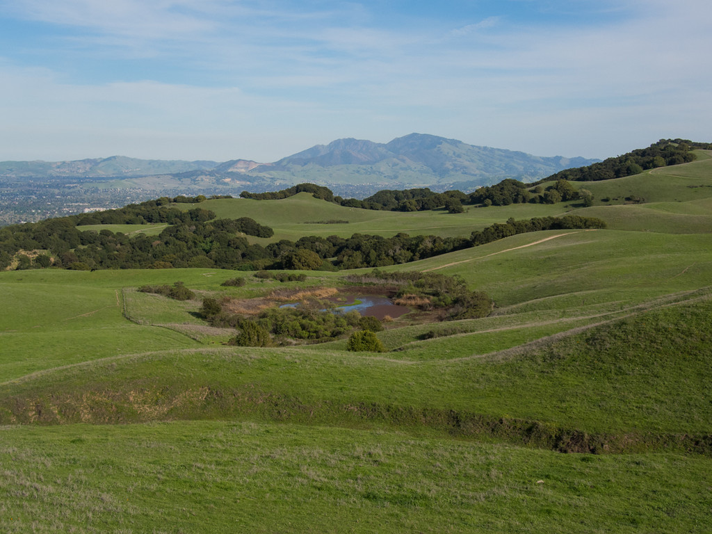 Briones regional park looking towards Mt Diablo...