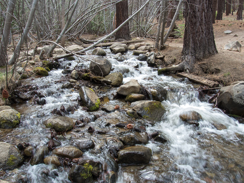 Trailside creek, southwest of Reno. Not a lot of water relative to a normal spring.