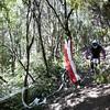 20110226_161541_NZSN8367
