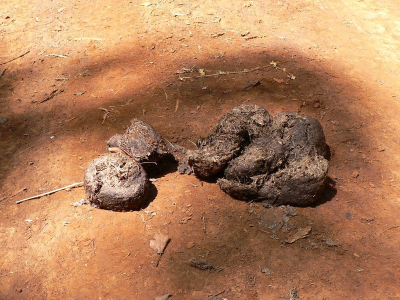 elephant turd (Mt.Kenya,E.Africa 2005)