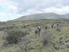 (Mt.Kenya,E.Africa 2005)