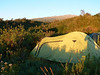 Campsite Bairuni Clearing 2525m. (Mt.Kenya,E.Africa 2005)