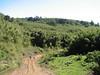Sirimon route (Mt.Kenya,E.Africa 2005)