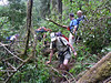 food path in tropical forest of the Kili (Kilimanjaro, Tanzania 2005)