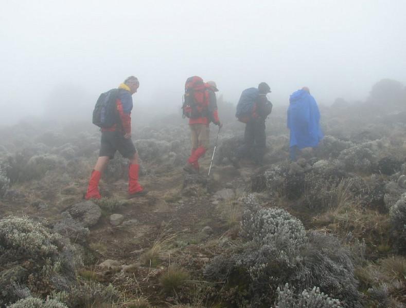 misty weather (Kilimanjaro, Tanzania 2005)