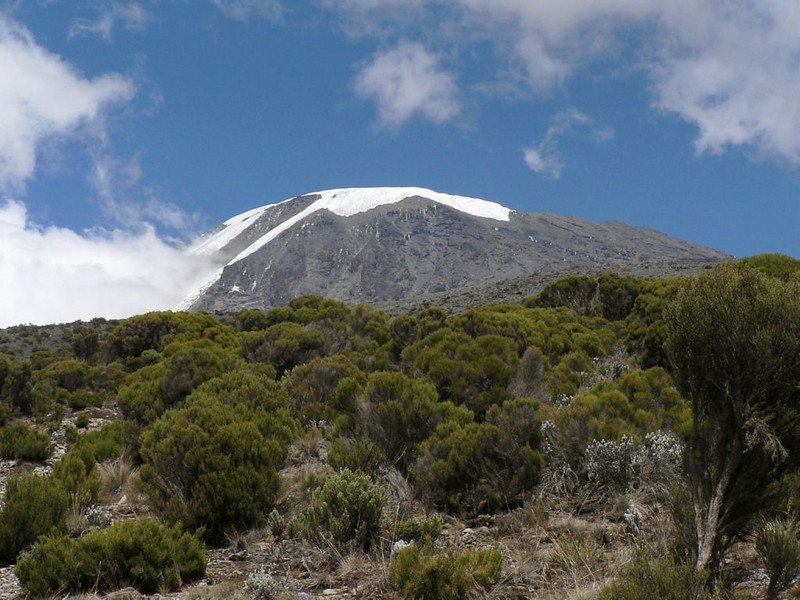 near Millenium Camp (Kilimanjaro, Tanzania 2005)