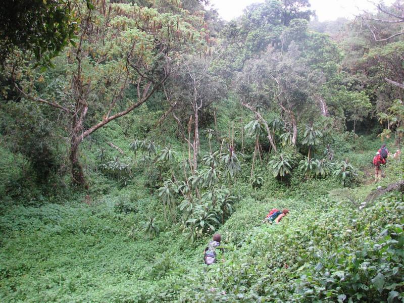 Tropical forest (Kilimanjaro, Tanzania 2005)