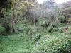 Tropical forest (Kilimanjaro, Tanzania 2005)
