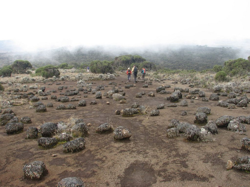 Shira plateau (Kilimanjaro, Tanzania 2005)