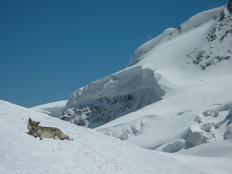 Hut-dog (Rifugio Marco Rosa CAI 3610m.)