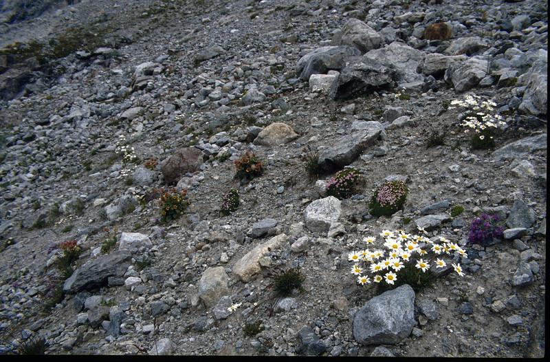 flora (the Ecrins 1992, 93)