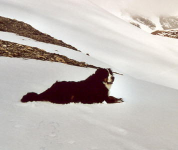 dog of the Oberwalderhutte OAV 2973m. (Hohe Tauern, Snow and Ice II, 2000)