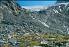 glacier of Aiquille la Grande Sassiere and Saxifraga aizoides (La Vanoise, France 1998)